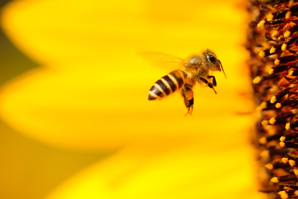 Bee - Mental Load leads to resentment