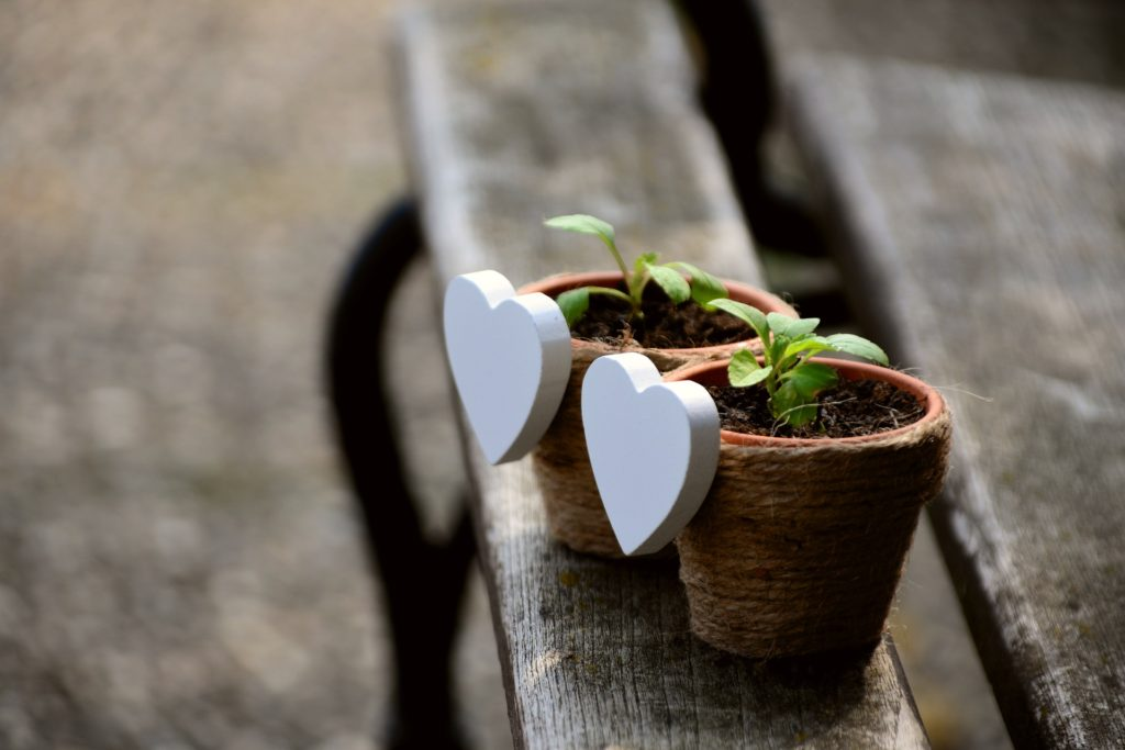 Hearts Plants - Cancer follow up care is traumatic